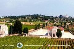 degustazione-Vini-Valle-dItria
